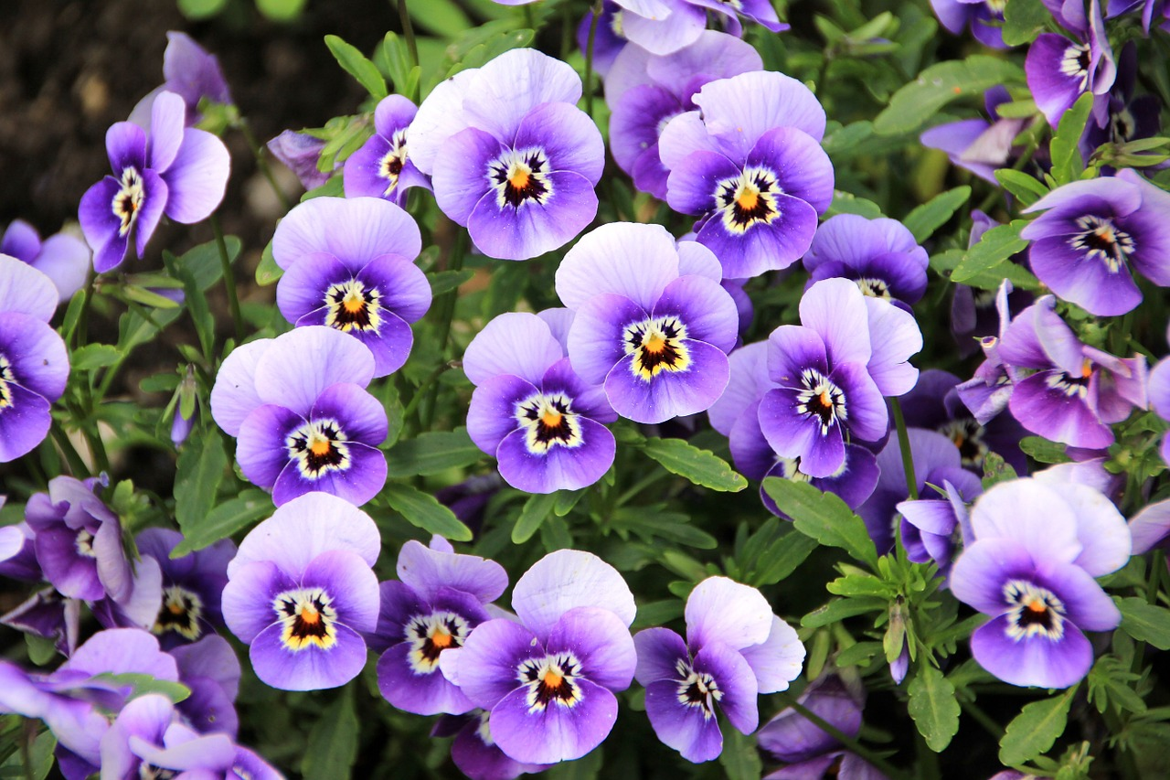 flowers-200270_1280